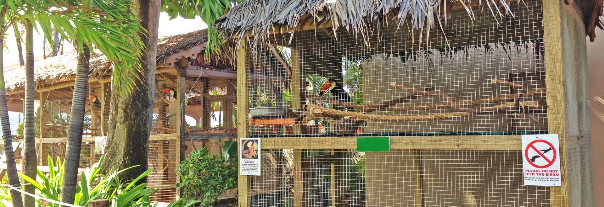 Bird Aviary Ensures Birds A Comfortable And Entertaining Home